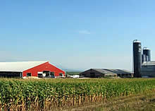Search Dairy Farms For Sale